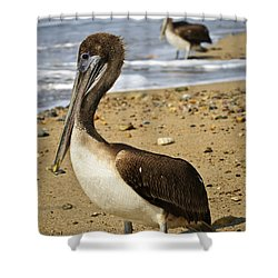 Pelicans On Beach In Mexico Shower Curtain by Elena Elisseeva