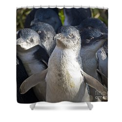 Penguins Shower Curtain by Steven Ralser
