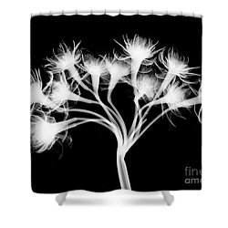Pentaster Blossom X-ray Shower Curtain by Bert Myers