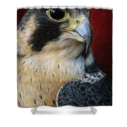 Peregrine Falcon Shower Curtain by Pat Erickson
