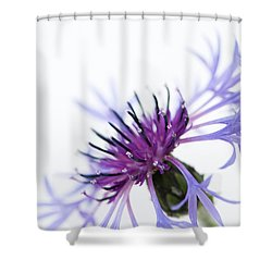 Perennial Cornflower Shower Curtain by Anne Gilbert