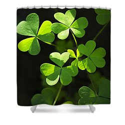 Perfect Green Shamrock Clovers Shower Curtain by Christina Rollo