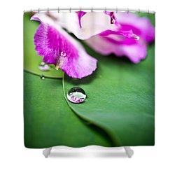 Peruvian Lily Raindrop Shower Curtain by Priya Ghose