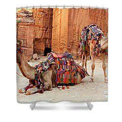 Petra Camels Shower Curtain by Stephen Stookey