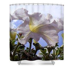 Petunia Sky Shower Curtain by Janice Westerberg