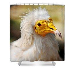 Pharaoh Chicken. Egyptian Vulture Shower Curtain by Jenny Rainbow