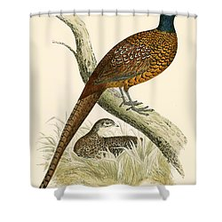 Pheasant Shower Curtain by Beverley R Morris