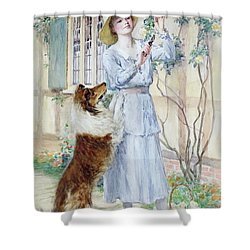 Picking Roses Shower Curtain by William Henry Margetson