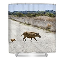 Piglet Shower Curtain by Patrick M Lynch