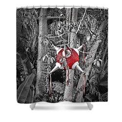 Pinata In Woods Shower Curtain by Joan  Minchak