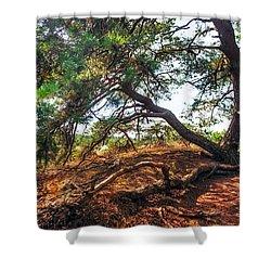 Pine Tree In Hoge Veluwe National Park 2. Netherlands Shower Curtain by Jenny Rainbow