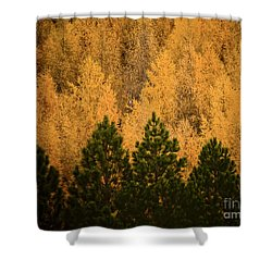 Pine Trees Shower Curtain by Tim Hester