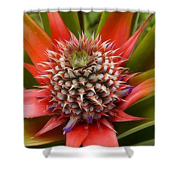 Pineapple Plant Shower Curtain by Aged Pixel