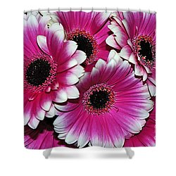 Pink And White Ornamental Gerberas Shower Curtain by Kaye Menner