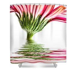Pink Gerbera Flood 4 Shower Curtain by Steve Purnell