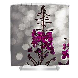 Pink  Shower Curtain by Heiko Koehrer-Wagner