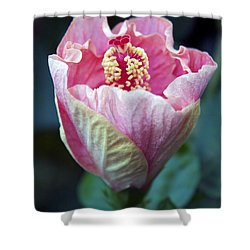 Pink Hibiscus Flower Bud Shower Curtain by Karon Melillo DeVega