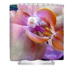 Pink Limonaid Orchids Macro Shower Curtain by Danielle  Parent