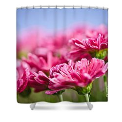 Pink Mums Shower Curtain by Elena Elisseeva
