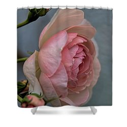 Pink Rose Shower Curtain by Leif Sohlman