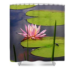 Pink Water Lily And Dragonfly Shower Curtain by Sherman Perry