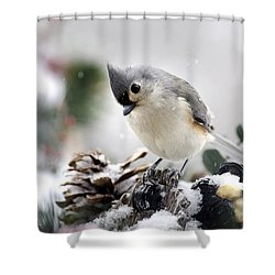 Playful Winter Titmouse Shower Curtain by Christina Rollo