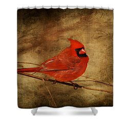 Please Feed The Birds Shower Curtain by Lois Bryan