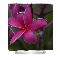 Plumeria Shower Curtain by Randy Bayne