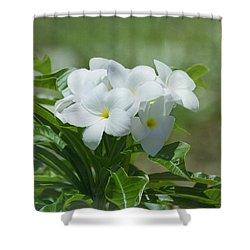 Plumeria - Tropical Flowers Shower Curtain by Kim Hojnacki
