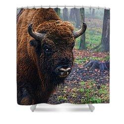 Polish Bison Shower Curtain by Mariola Bitner