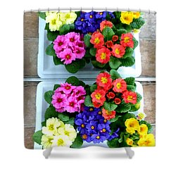 Polyanthus Primroses Shower Curtain by Will Borden