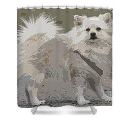 Pomeranian Dog Shower Curtain by Jivko Nakev