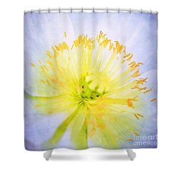 Poppy Close Up Shower Curtain by Darren Fisher
