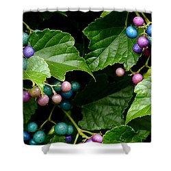 Porcelain Berries Shower Curtain by Lisa Phillips