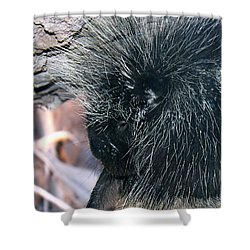 Porcupine Shower Curtain by Kume Bryant