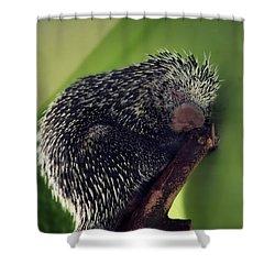 Porcupine Slumber Shower Curtain by Melanie Lankford Photography