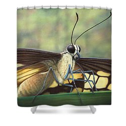 Portrait Of A Butterfly Shower Curtain by James W Johnson