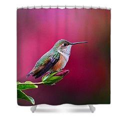 Portrait Of A Hummer Shower Curtain by Lynn Bauer