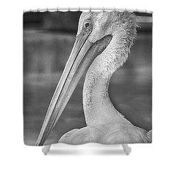 Portrait Of A Pelican Shower Curtain by Jon Woodhams