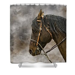 Portrait Of A Rope Horse Shower Curtain by Jana Thompson
