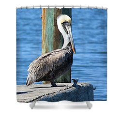Posing Pelican Shower Curtain by Carol Groenen