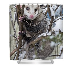 Possum Shower Curtain by Steven Ralser