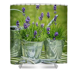 Pots Of Lavender Shower Curtain by Amanda Elwell