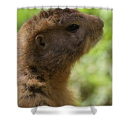 Prairie Dog Portrait Shower Curtain by Dan Sproul