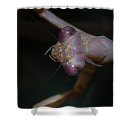 Praying Mantis 3 Shower Curtain by Angela A Stanton
