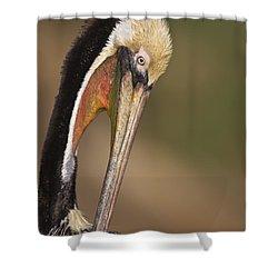 Preening Pelican Shower Curtain by Bryan Keil