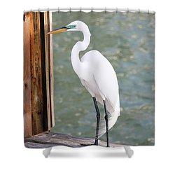 Pretty Great Egret Shower Curtain by Carol Groenen