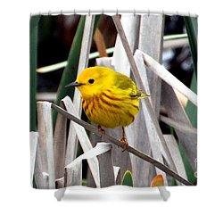 Pretty Little Yellow Warbler Shower Curtain by Elizabeth Winter