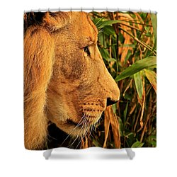 Profiles Of A King Shower Curtain by Laddie Halupa