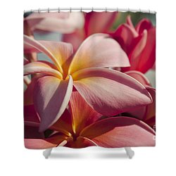 Pua Melia Ke Aloha Maui Hikina Shower Curtain by Sharon Mau
